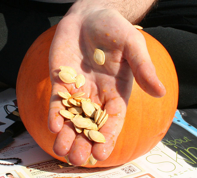 File:Pumpkin seeds in hand.jpg