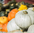 Pumpkins Galore! (15141192257).jpg