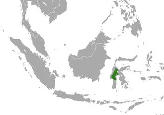 Pygmy tarsier - Image: Pygmy Tarsier area