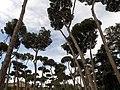 Quartiere III Pinciano, Roma, Italy - panoramio (19).jpg