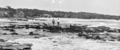 Queensland State Archives 1146 Alexandra Headland January 1931.png