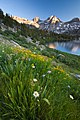 Rae Lakes Wildflowers (6071619693).jpg