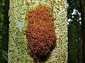 Red Ants (8440494017).jpg