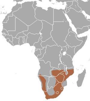 Reddish-gray musk shrew - Image: Reddish gray Musk Shrew area