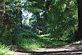 Redwood Memorial Grove 6 2017-06-12.jpg