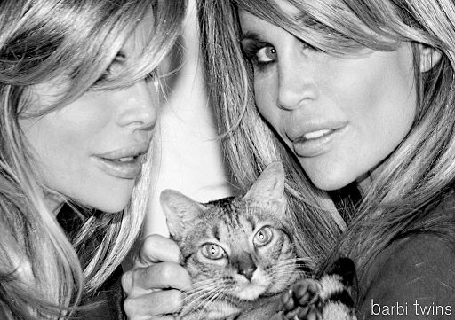 Rescued cat barbi twins adopting a rescue cat
