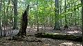 Rezerwat przyrody Bukowiec (województwo łódzkie) 03.jpg