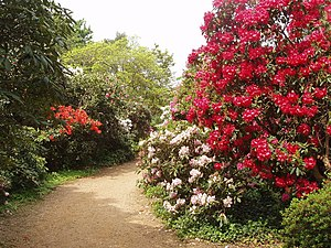 Cannizaro Park - Rhododendron dell in Cannizaro Park