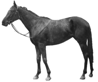 Rhodora (horse) Irish-bred Thoroughbred racehorse