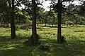 Riverine bogland on north side of Hincheslea Wood - geograph.org.uk - 181852.jpg