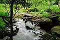 Rocks-Water-flow-Stream ForestWander.JPG