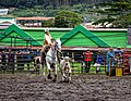 Rodeo Event Calf Roping 11.jpg