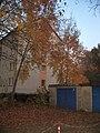 Ruhland, Ortrander Str., Zitterpappeln bei Hausnr. 13d, Herbst.jpg