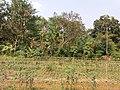 Ruined Nilkuthi at Manirampur in Hooghly 11.jpg