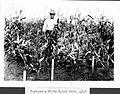 Rustler's white flint corn.jpg