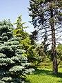 Rutgers Gardens - conifers.JPG