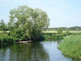 Rzeka Wkra.JPG