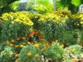S2006 flowers 4.JPG