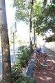 SZ 深圳 Shenzhen 鹽田區 Yantian District 深鹽路 Shenyan Road Greenway tree 樟樹 Cinnamomum camphora Sept 2017 IX1 public bike parking.jpg