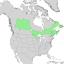 Salix pyrifolia range map 1.png