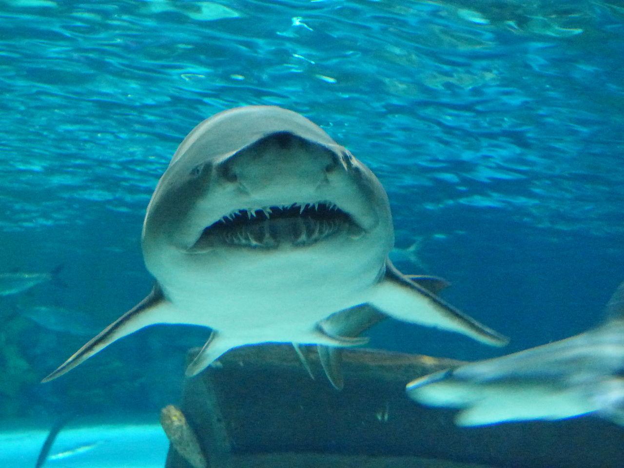 Image Result For Myrtle Beach Aquarium