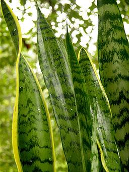Nie Wieder Ein Fenster Offnen Mit Den Richtigen Pflanzen