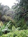 Sariaya,Quezonjf9733 15.JPG