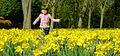 Scotch Daffodils.jpg