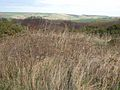 Scrub at Ladycross - geograph.org.uk - 291001.jpg