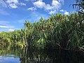Sebangau River 02.jpg