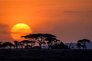 Serengeti - Sunset near Seronera Camp