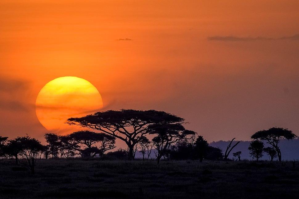 Serengeti sunset-1001