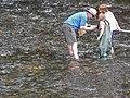 Service biologist Bryan Tompkins checking a kick net (5029753474).jpg