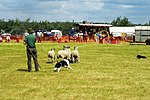 Sheep Dog Display (2621004547).jpg