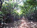 Shimba Hill 07.JPG