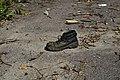 Shoes (21414586541).jpg