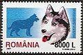 Siberian-Husky-Canis-lupus-familiaris Romania 2005.jpg