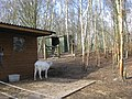 Smallholding with goats - geograph.org.uk - 1773795.jpg