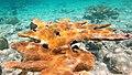 Snorkeling Bachelor Beach, Bonaire (12998055594).jpg