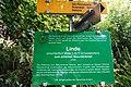 Sommerlinde Vorderwinkl, Gemeinde Arriach, Villach Land, Kärnten.jpg