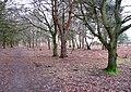 Southwards on the Peddars Way - geograph.org.uk - 1701416.jpg