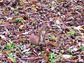 Squirrels in Ivan Franko's park - panoramio.jpg