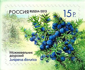 Stamp of Russia 2013 No 1682 Juniperus sabina var davurica.jpg