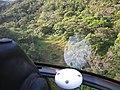 Starr-091112-9507-Clidemia hirta-aerial view-West Maui-Maui (24362725453).jpg