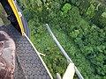 Starr-141014-2179-Caesalpinia decapetala-aerial view-Kakipi Gulch Haiku-Maui (24620378823).jpg