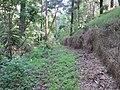 Starr-170426-7997-Thunbergia alata-view trail-Hawea Pl Olinda-Maui (34840175420).jpg