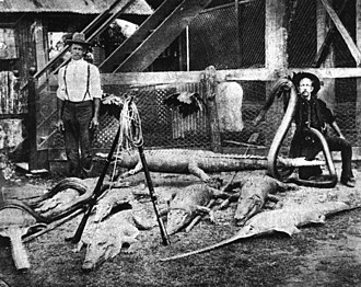 Halifax, Queensland - Hunters display dead crocodiles, fish and snakes outside Robinson's Hotel, Halifax, in 1907