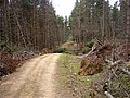 Storm damage in Harwood Forest - geograph.org.uk - 529078.jpg