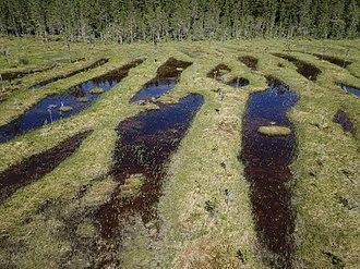 Flark - Flark and strings in a bog of Sweden.