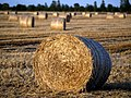 Straw Bale in the Evening Sun - geograph.org.uk - 519848.jpg